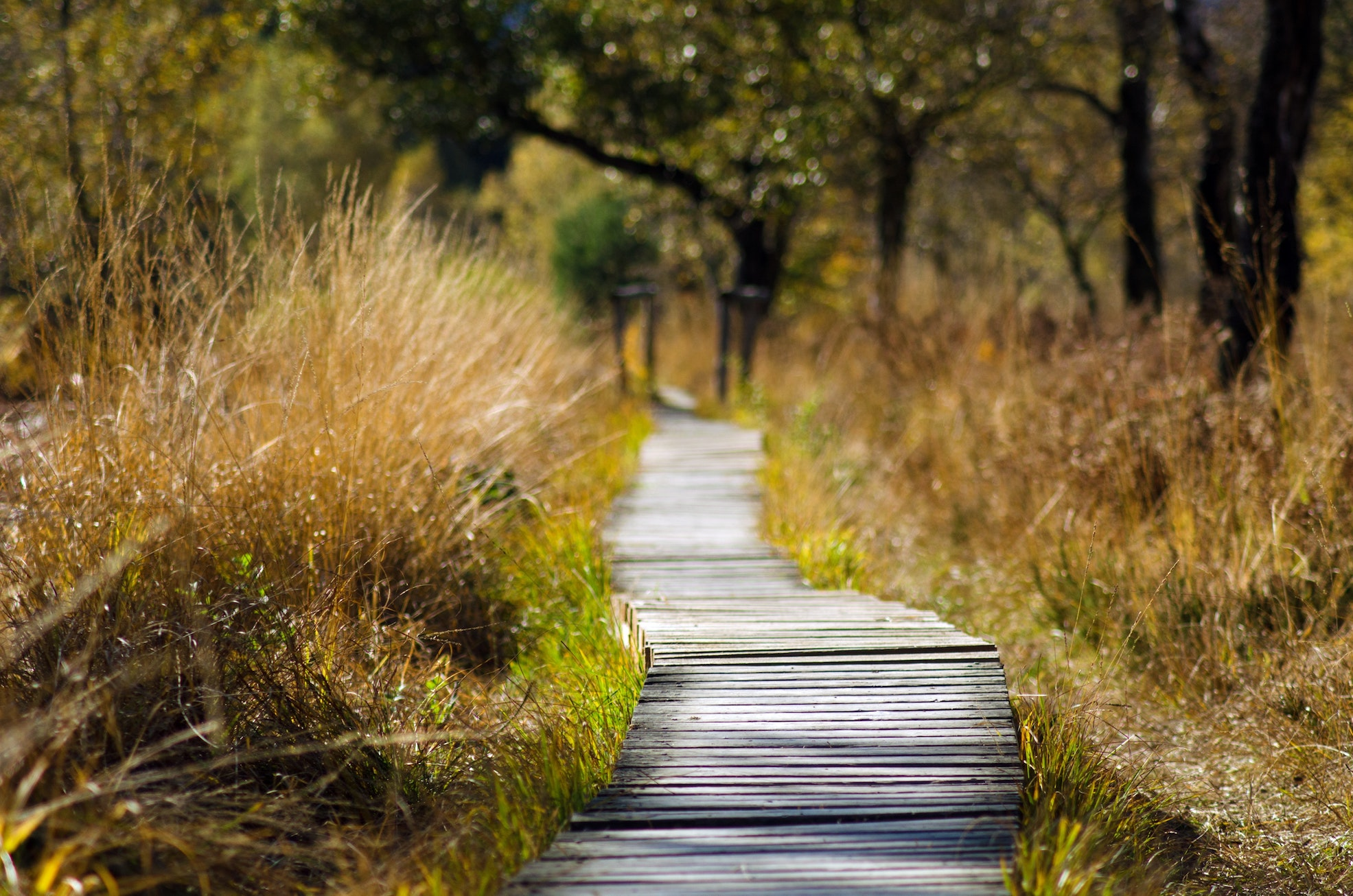 adventure-boardwalk-countryside-289327-pexels